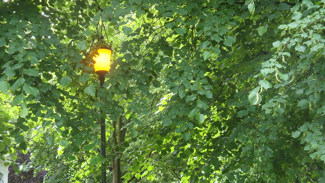 Light daytime