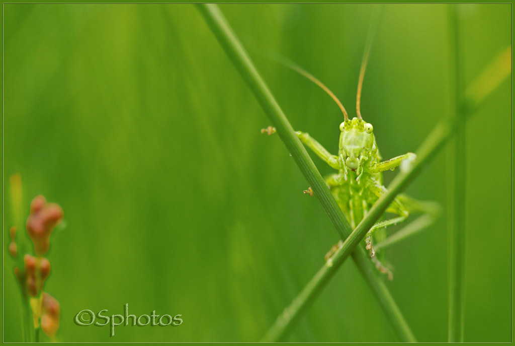 Gary Grasshopper