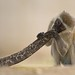 Vervet Monkey - Beach Boy - by Wouter's Wildlife Photography