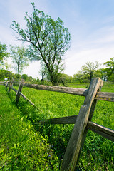 Bluff Spring Fen Fence & Tree ©2016 Lauri Novak Photography