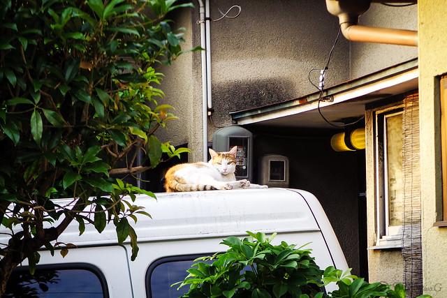 Today's Cat@2016-06-18