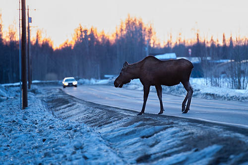 road winter sunset snow cold alaska crossing unitedstates moose 70200 wasilla nikond700