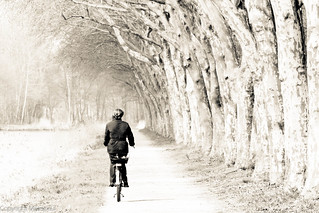 Lingen - Radweg am DEK-.jpg