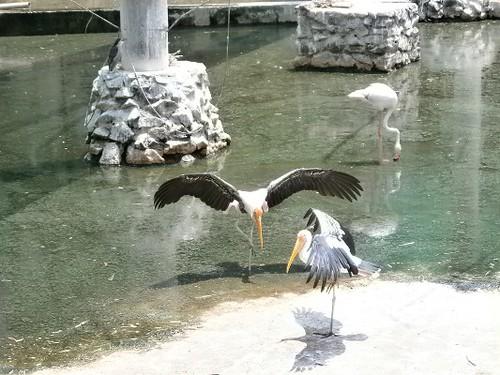 Stork-Vandaloor-Zoo-Chennai