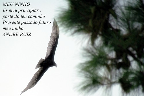 MEU NINHO by amigos do poeta
