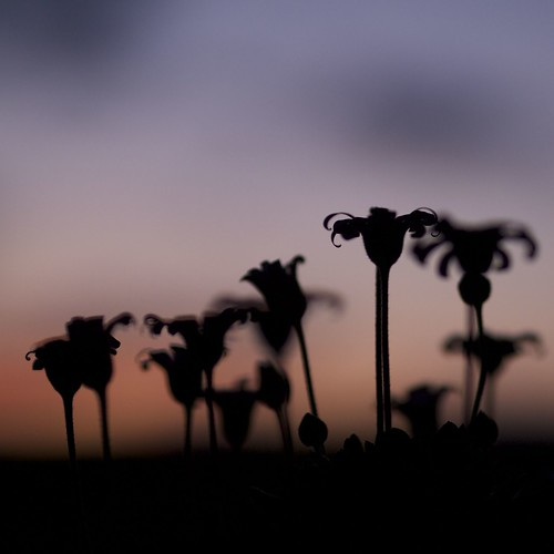 sunset flower silhouette square dof bokeh olympus ep3 lunagallery 45f18