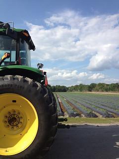 pretty shot of John Deer tractor at Wish Farms