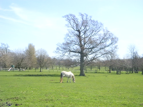 Horse with tree