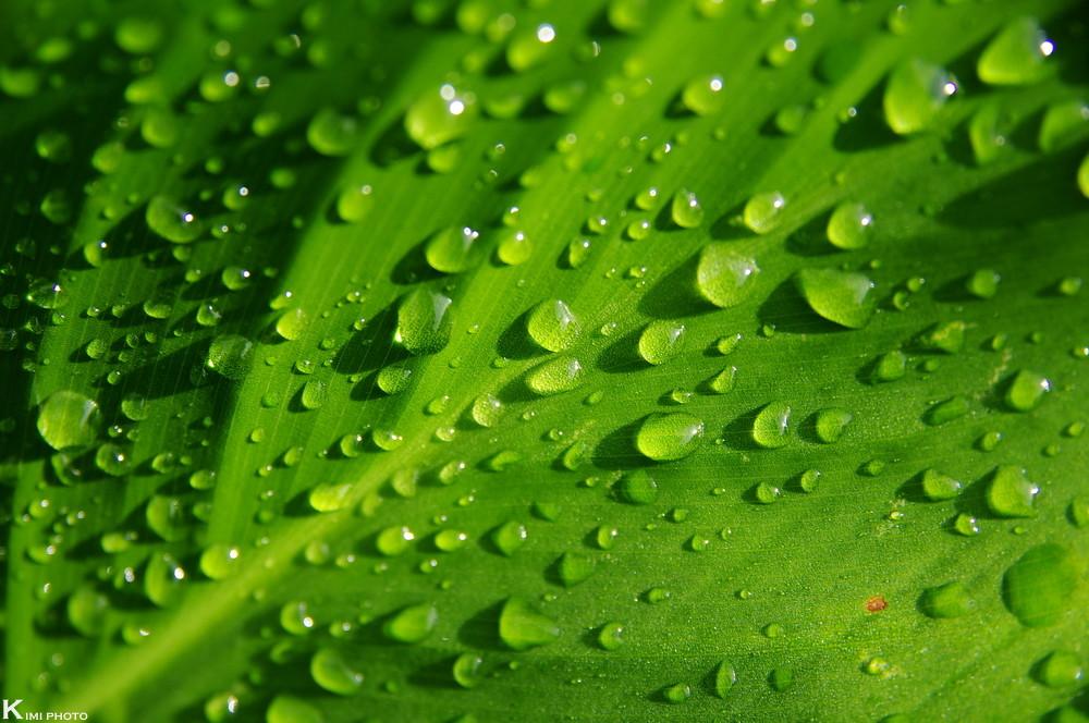 PENTAX-綠色風景