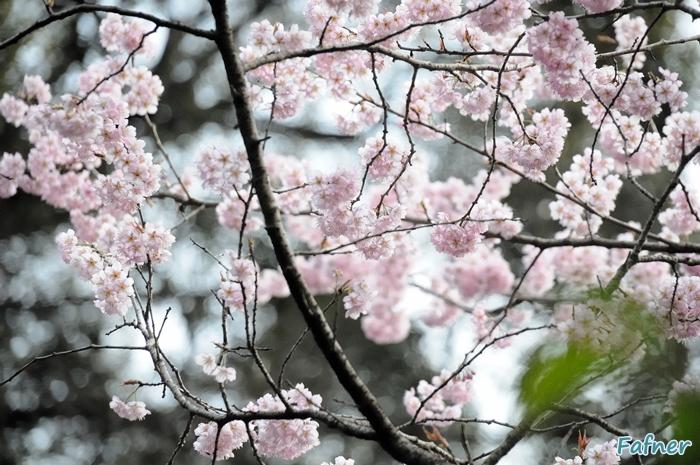 KyotoDay3_116