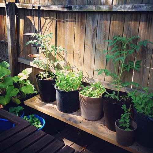 plant babies, garden update