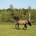 Small photo of canter