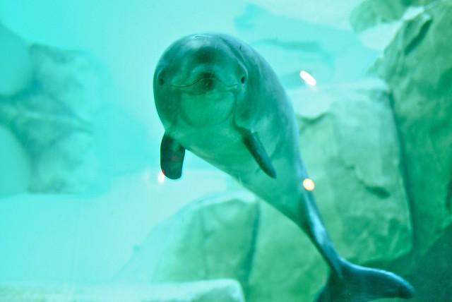 Vancouver Aquarium | Stanley Park, Vancouver