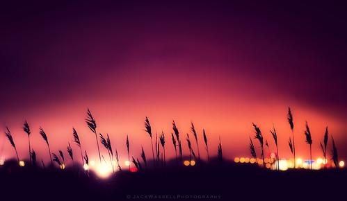 city sky plant colors grass night lights focus dof bokeh depthoffield 85mmf18 stratfordconnecticut jackwassell