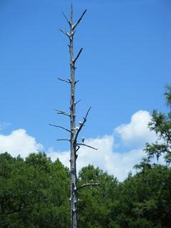 Sparkleberry Swamp Jun 2, 2012 2-20 PM