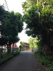 朝散歩 (2012/6/4)
