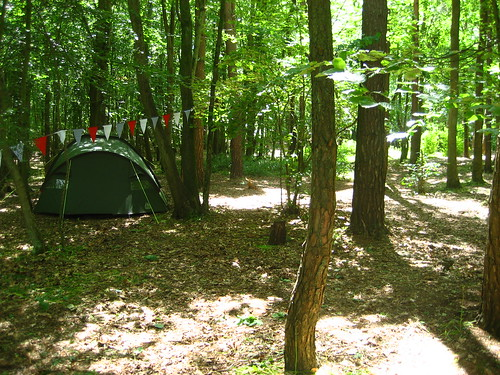 Bunting and tent in the woods