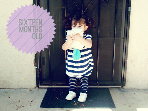 sixteen months old