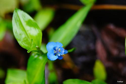flores verde azul méxico flora hidalgo