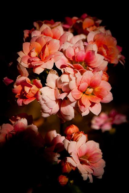 IMAGE: http://farm8.staticflickr.com/7095/13267036444_52ed26af01_z.jpg