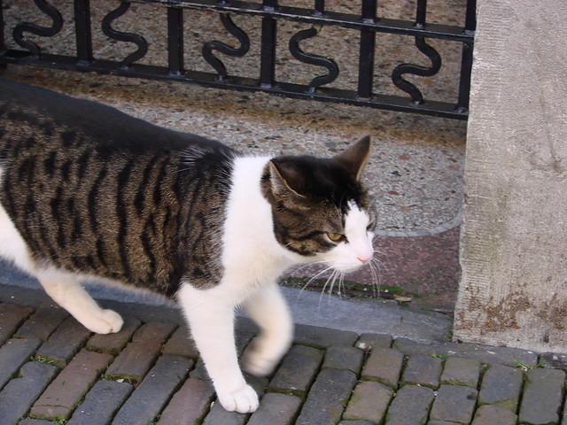 Voetiusstraat Kat