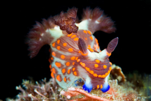lembeh scuba diving