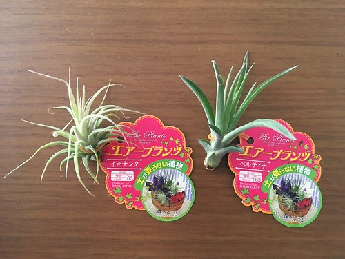 AirPlants (3)