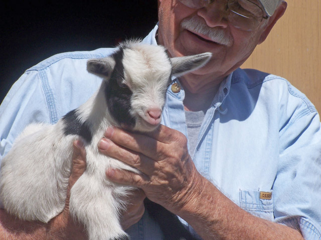 baby goats 2012 001