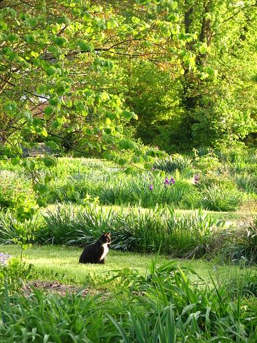 Zak in the garden