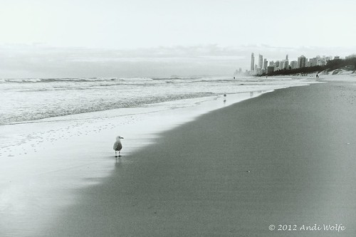 Gull on the beach at dawn by andiwolfe (Jet-lagged)
