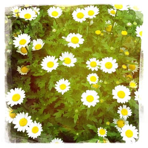 Flower03 #hipstamatic