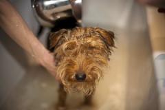 the bearded lady takes a bath