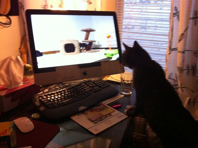 Maggie watching the kitten cam