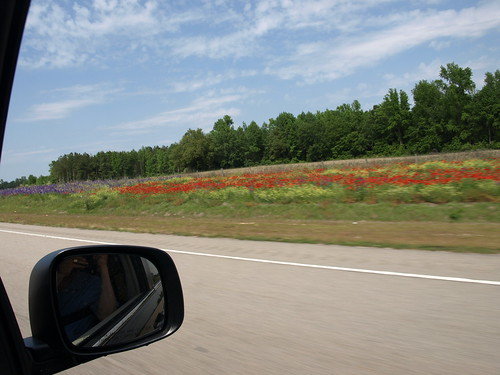 Wildflowers on I-795/US 264