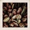 tulip@market