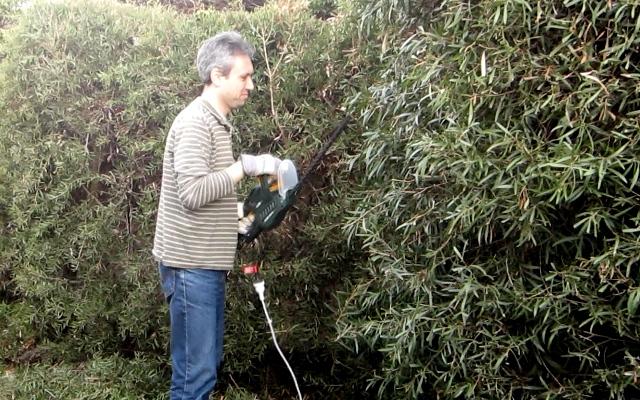 Daniel's hedgetrimmer