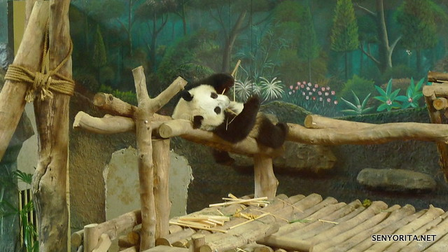 Bamboo Sticks for a lazy baby