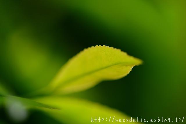 greens...