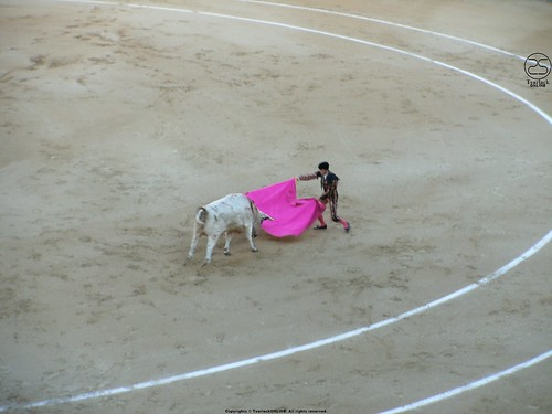 Bullfight by TsarlackONLINE