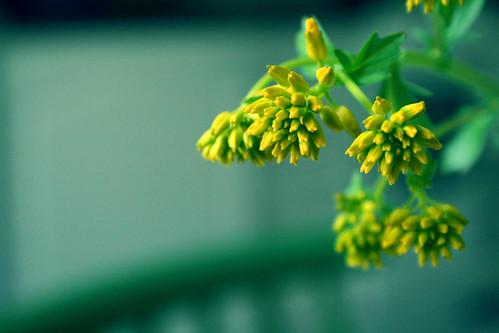 Flower testing