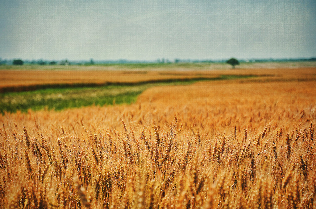 Waves Of Grain