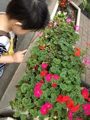 とらちゃんと朝散歩(2012/5/26)