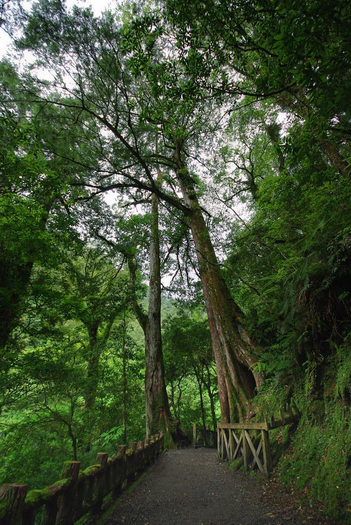 拉拉山神木群  放鬆身心的好地方