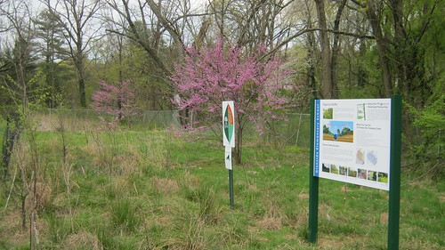 Glenside Riparian Buffer with sign