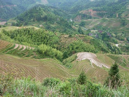 C-Guangxi-Dazhai-Descente (3)