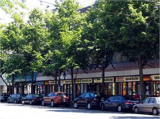 trees along commercial street (courtesy of Dan Burden)