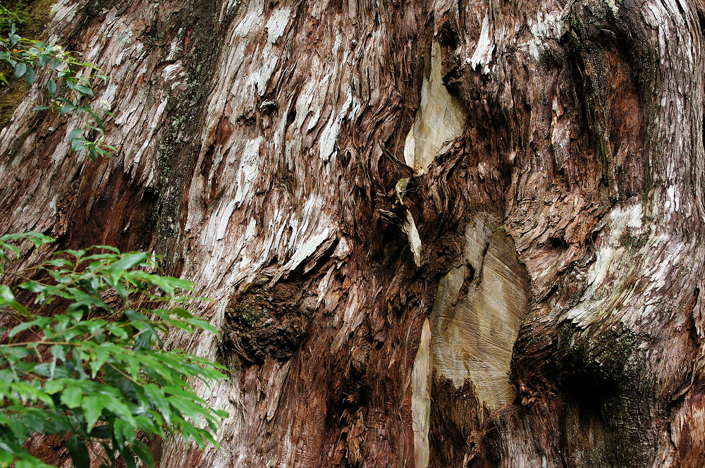 巨木群,與往拉拉山的路上-065