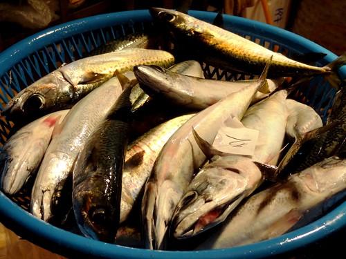 海豚喜歡吃鯖魚,人也喜歡吃,何者才是把魚吃光的兇手呢?圖為魚市場裡的鯖魚們,等著被人類買回家冰在冰箱裡。