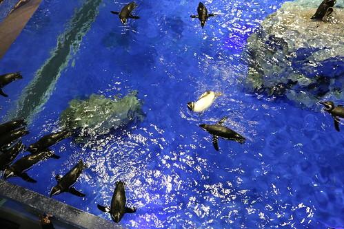 sumida_aquarium10