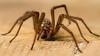 itsy bitsy spider.. by Trond Strømme